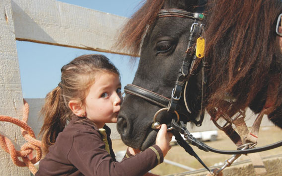 Little girl kissing a horse